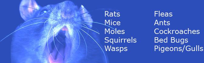 IPC Pest Control